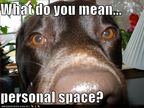 funny-dog-pictures-personal-space.jpg